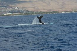 One whale we saw - April 2010