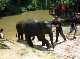 Photo of Kuala Lumpur Private Tour: Elephant Orphanage Sanctuary Day Tour from Kuala Lumpur Bath's over