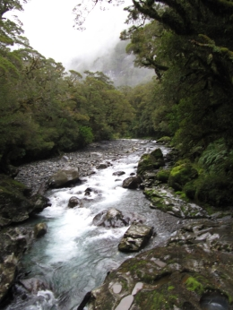 Photo of Queenstown Milford Sound Full-Day Tour from Queenstown Milford Sound from Queenstown