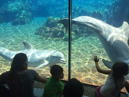 Loved watching the dolphins interact with the people on the other side of the glass - they were so playful and happy!, JennyC - May 2016