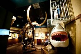 Photo of New York City Ripley's Believe It or Not! Times Square shark.jpg