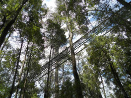 Photo of Hobart Huon Valley and Tahune Forest Airwalk Tour from Hobart Tahune Forest Airwalk from below