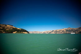 Photo of Christchurch Akaroa Harbour Nature Cruise Amazing harbour