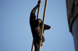Photo of Orlando Disney's 5-Day Magic Your Way Ticket Climbing ape!
