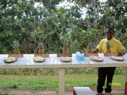 Winston and 5 types of pineapples , Daniel M - May 2011