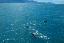 Photo of Christchurch Kaikoura Whale Watch Day Tour from Christchurch