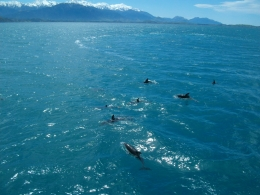 Photo de Christchurch Croisière d'observation des baleines d'une journée à Kaikoura au départ de Christchurch holiday down under october 2010 245