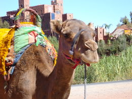 Photo of Marrakech Berber Trails 4WD Day Trip from Marrakech New friends outside of Marrakech