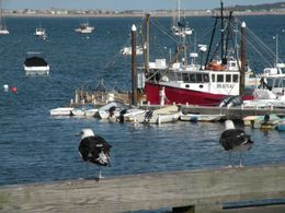 Photo of Boston Cape Cod Fast Ferry ptown harbor