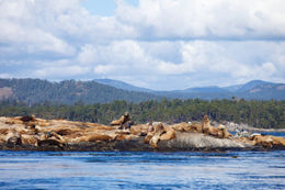 Resting place for sea lions, just off the coast of Victoria, BC - December 2011