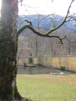 Photo of Munich Royal Castles of Neuschwanstein and Linderhof Day Tour from Munich Swans by the Villa