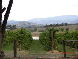 Photo of Melbourne Yarra Valley Wineries and Puffing Billy Steam Train Day Tour from Melbourne vines