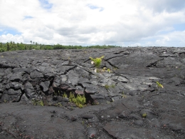 This was a former lava flow that went down to a black sand beach., Kevin P - August 2010