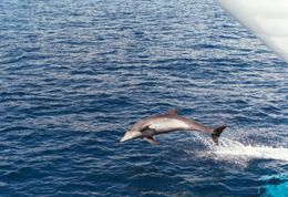 Photo of Oahu Oahu Whale Watching Cruise Oahu Whale Watching Cruise