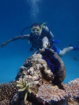 Photo of Cairns & the Tropical North Great Barrier Reef Diving and Snorkeling Cruise from Cairns Giant clam