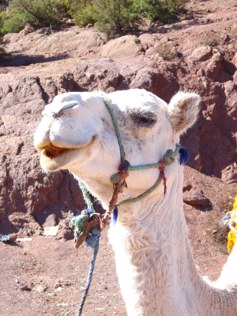 New friends outside of Marrakech - Marrakech