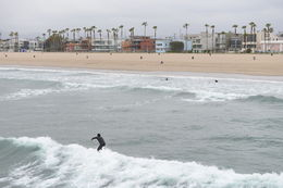 Surfers in the water, Jeff - September 2013