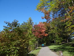 Photo Number 3 of the beautiful nature of Bear Mountain , P.J.H. S - October 2011