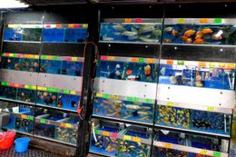 Goldfishes being sold in a market - August 2012