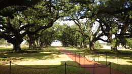 The oak alley at the Oak Alley Plantation. , Annastiina.papunen - January 2014