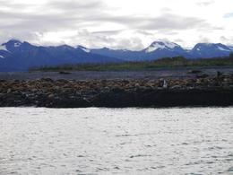 Photo of Juneau Juneau in One Day: Mendenhall Glacier, Whale Watching and Salmon Bake Sealions