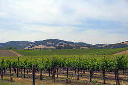 wine country tour , Tinette A - June 2013
