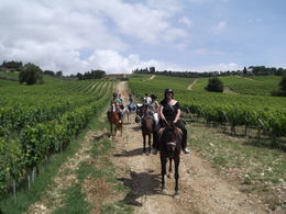 Our group on our way to the winery. , vikki - August 2011