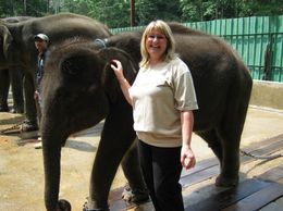 Photo of Kuala Lumpur Private Tour: Elephant Orphanage Sanctuary Day Tour from Kuala Lumpur Newest arrival