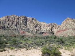 Photo of Las Vegas Morning Maverick Horseback Ride with Breakfast Red Rock Canyon Trail Ride