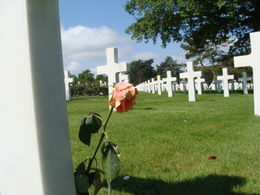 A Single Rose By A Cross In The American Cemetery , Richard P - June 2012
