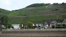 Photo of Rhine River KD Rhine Pass from Mainz Wine crops along the Rhein.