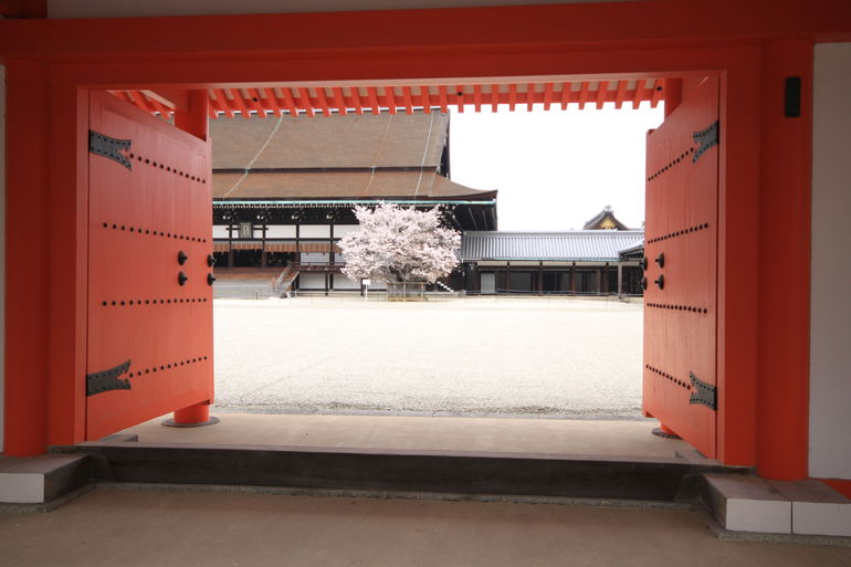Imperial Palace Cherry Blossoms - Kyoto