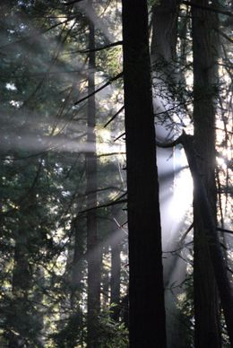 A tantalizing mix of sun and shade in this cool redwood forest., Kevin C - October 2009