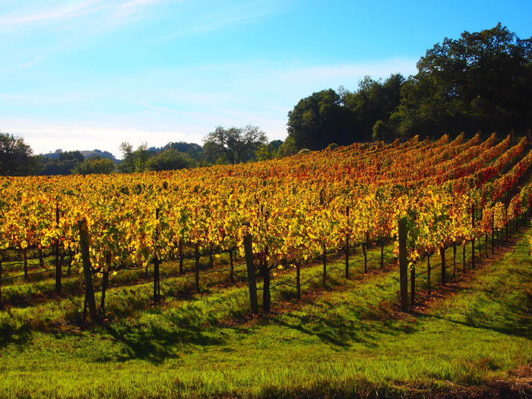 Napa's vineyards - San Francisco