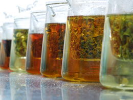 Photo of   tea tasting.JPG