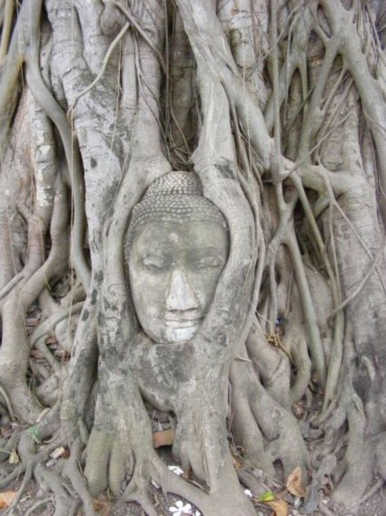 Buddha Head in Tree - Bangkok