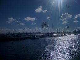 Another shot of the harbor., Bandit - August 2012