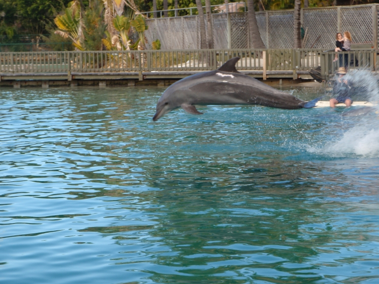 Sea world -