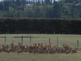 Deer farm en route to Mt Cook, John K - April 2010