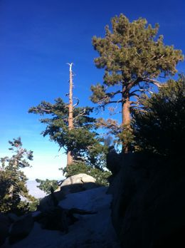 Photo of Palm Springs Palm Springs Aerial Tramway The view from the top