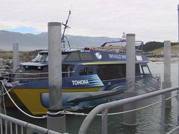 Photo of Christchurch Kaikoura Whale Watch Day Tour from Christchurch Tohora