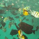 Photo of Hurghada Red Sea Snorkeling Amazing Snorkelling