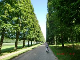 The manicured pathways of trees were the perfect venue for a bike ride. , Sandra L - September 2011