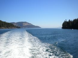 Photo of Vancouver Seaplane Flight to Victoria and Whale-Watching Cruise Chasing the Whales
