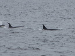 Learned that each whale has individual fin id-they have a book so you can compare photos and id who you saw! , Ann - May 2012