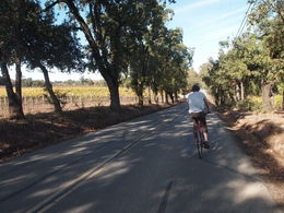 Biking around Napa's wineries, Rachel - November 2012
