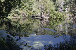 Photo of Seattle Seattle Shore Excursion: Bainbridge Island and Bloedel Reserve Small-Group Luxury Tour pond in the woods