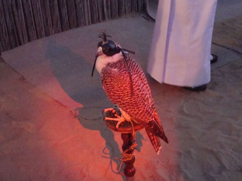 Falcon on dispay - Dubai