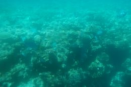 Photo of Cairns & the Tropical North Great Barrier Reef Diving and Snorkeling Cruise from Cairns On the semi-submersible submarine