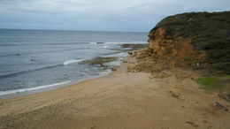 Photo of Melbourne Great Ocean Road Small-Group Eco-Tour from Melbourne SAM_3910